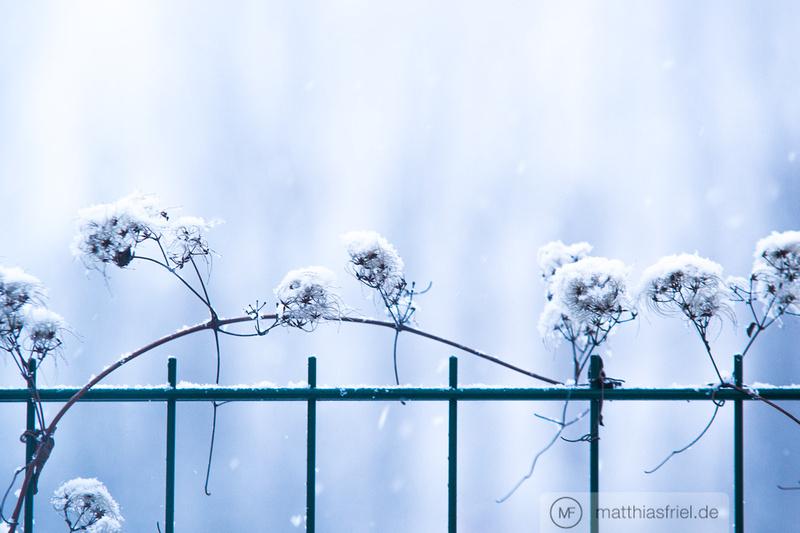 Matthias Friel: winter berlin 2013 &emdash; DSC03234